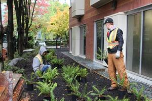 paraspace volunteers 2018 placing plants