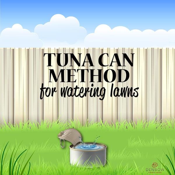 tuna can method watering lawns