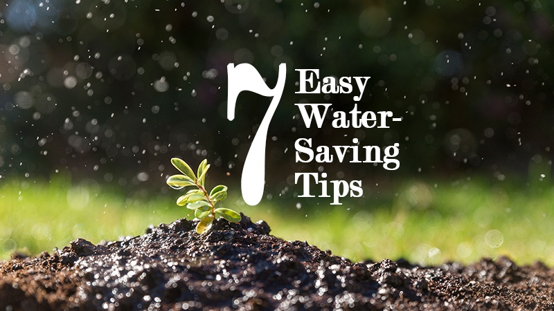 7 easy water saving tips