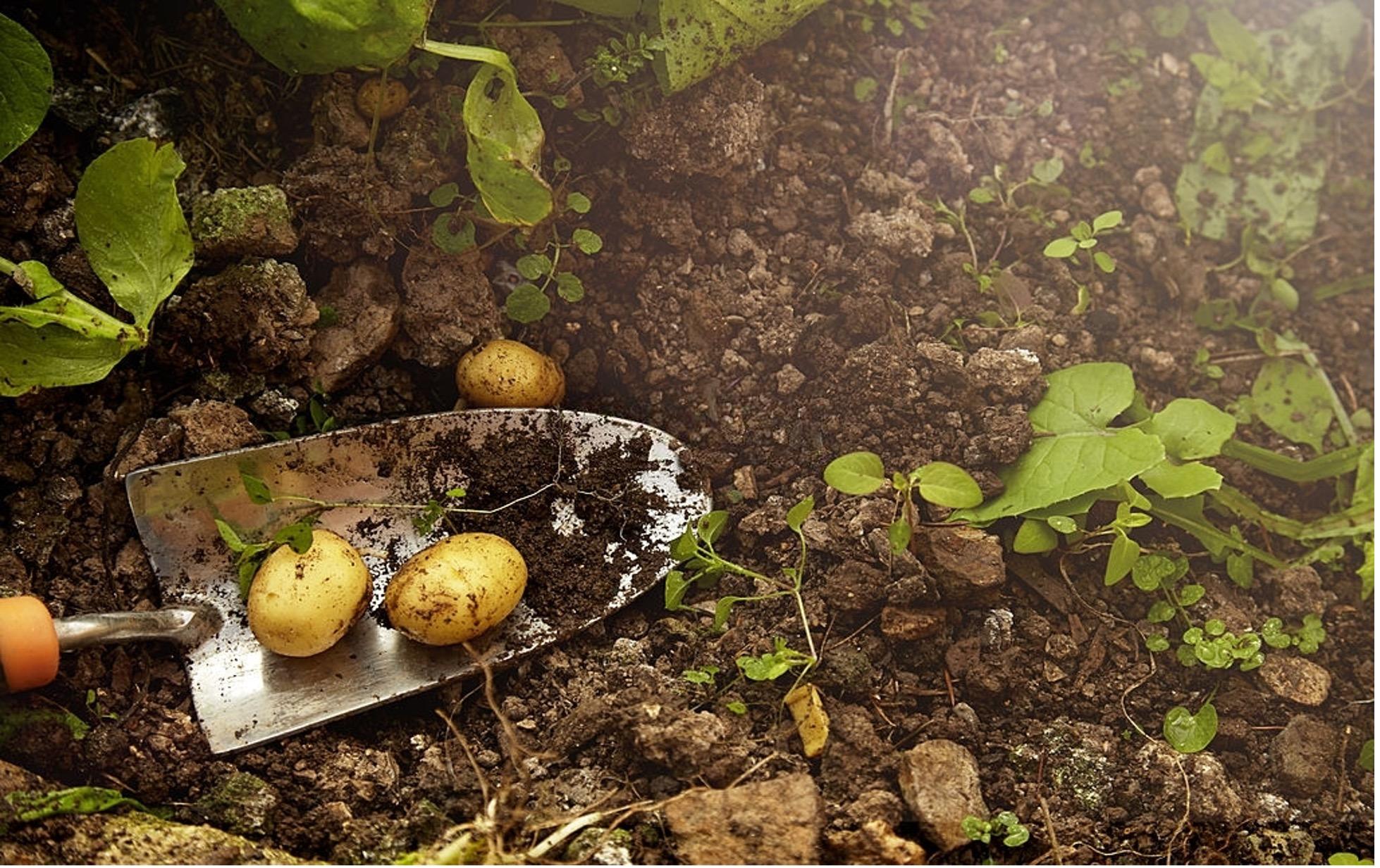 Benefits Of Using A Topgrade Garden Soil