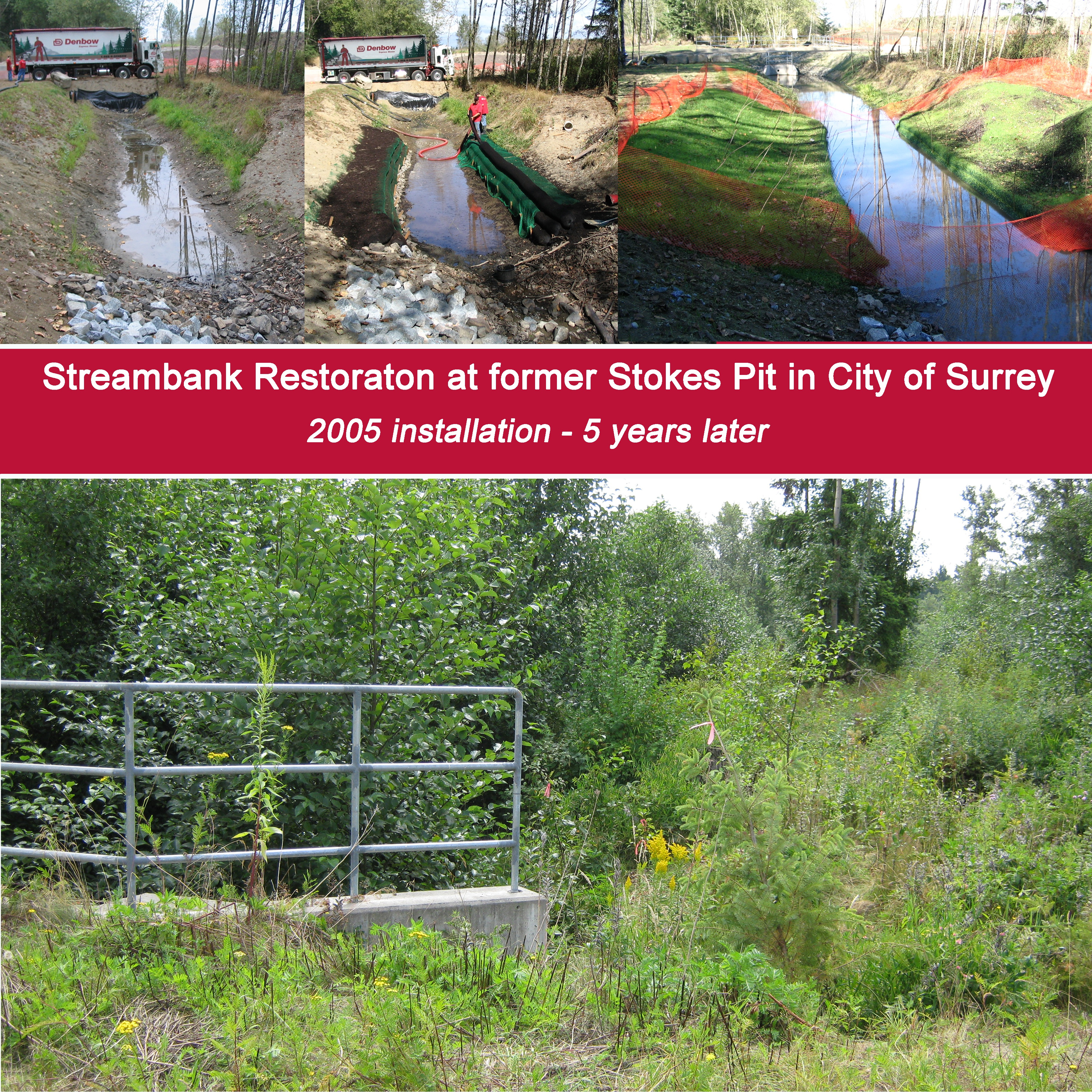 Streambank Restoration - Stokes Pit Surrey, BC 5 years