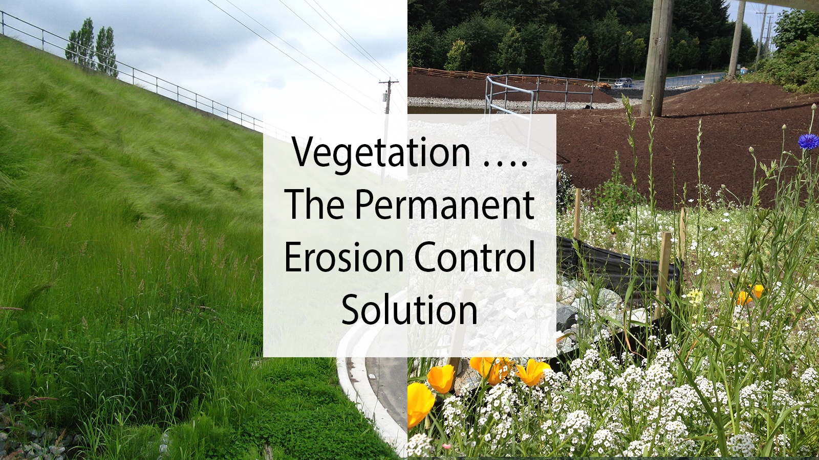 Vegetation - the permanent erosion control solution