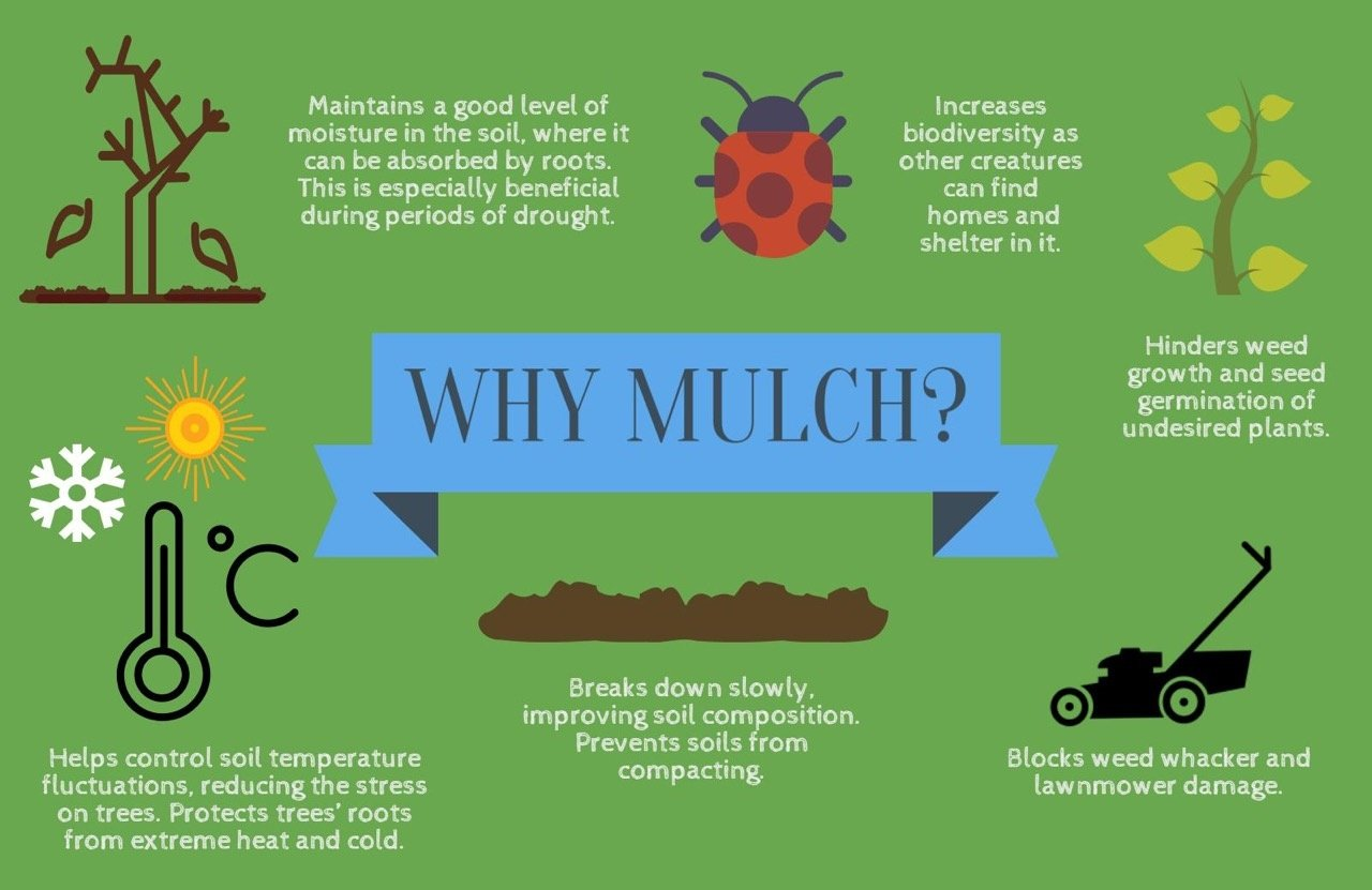 Why Mulch infographic