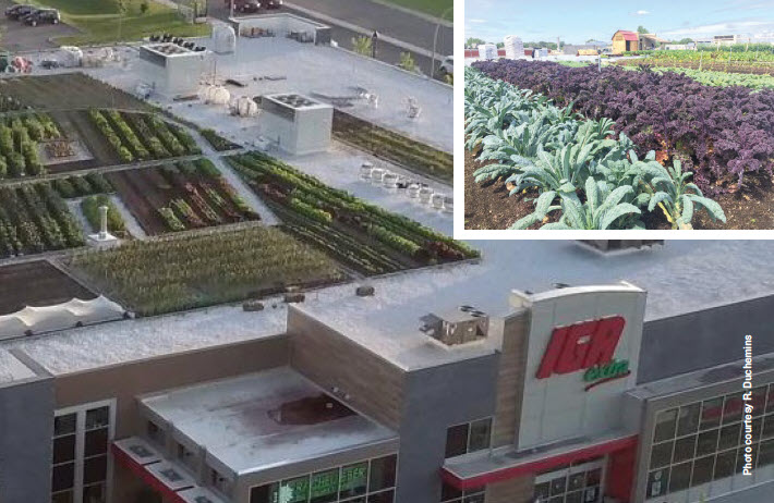 Grocery Store Produces Fresh Food & Harvests Water In Quebec